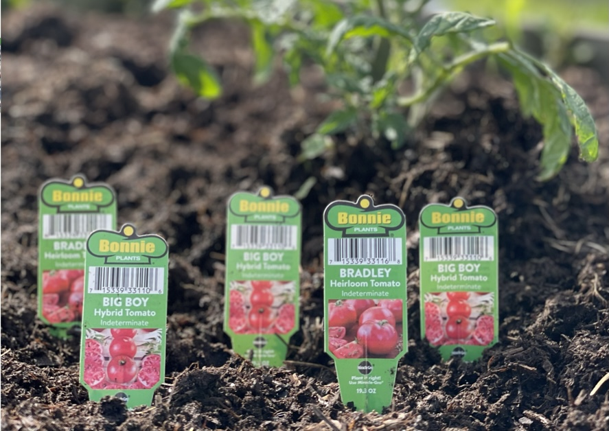 How to Grow Tomatoes: Tips and Tricks